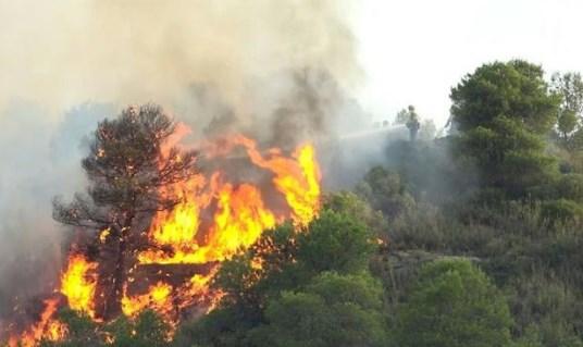 Ini dia Dampak Negatif Dari Kebakaran Hutan Gambut